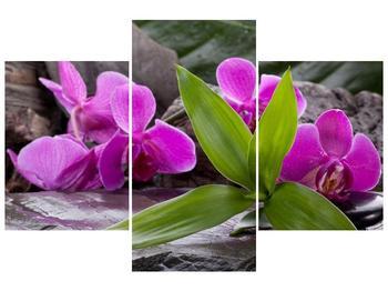 Obraz fialových orchidejí s listím (F004027F90603PCS)