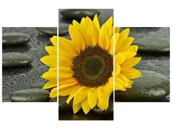 Třídílný obraz F005794F90603PCS (F005794F90603PCS)