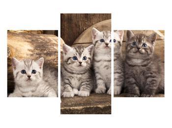 Obraz koťat (K011214K90603PCS)