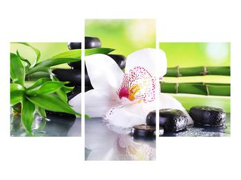 Obraz orchidee (K011995K90603PCS)