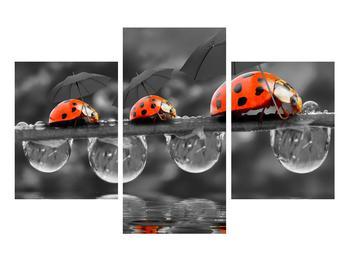 Obraz lienok sedembodkových s dáždnikmi (K012059K90603PCS)