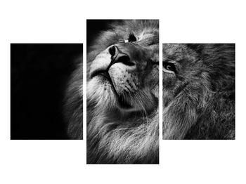 Černobílý obraz lva (K012767K90603PCS)