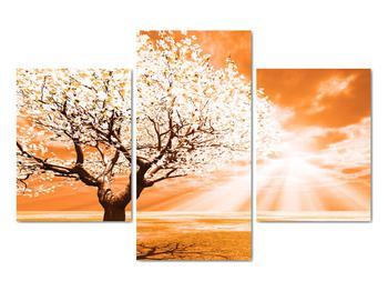 Oranžový obraz stromu (V020095V90603PCS)