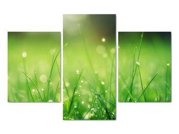 Obraz - rosa na tráve (V020169V90603PCS)