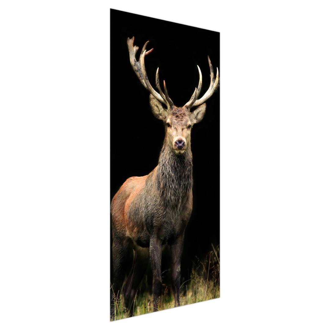 Fototapeta na dveře - krásný jelen (D011368D95205)