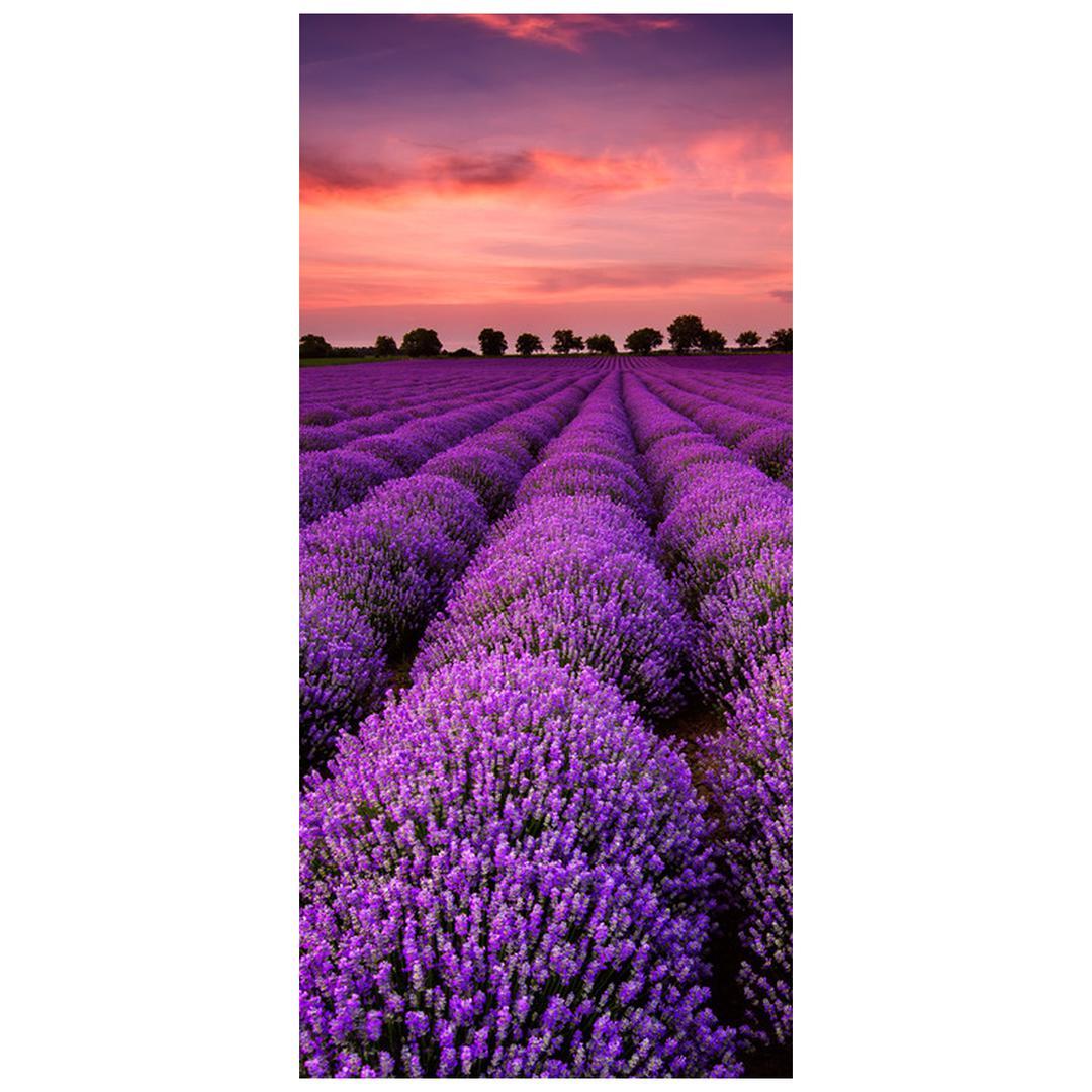 Fototapeta pentru ușă - peisaj cu lavanda (D011996D95205)