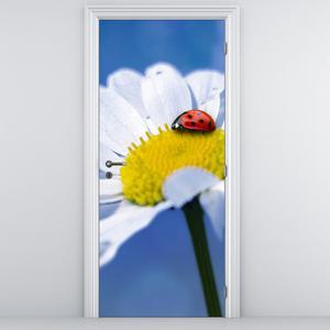Fototapeta na dveře - Beruška na kopretině (D014792D95205)