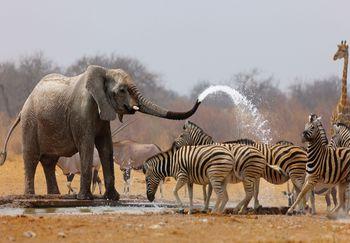 Fototapeta - Afrika (T030093T254184A)