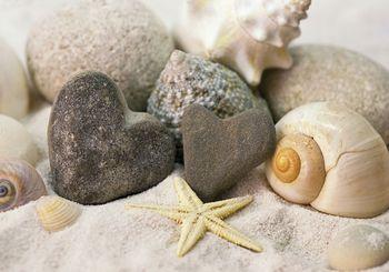 Fototapeta - Kamene a mušle na pláži (T030211T254184A)