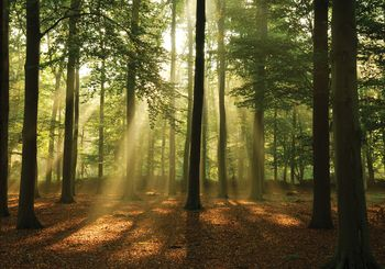 Fotótapéta - Erdő napfényben (T030259T368280A)