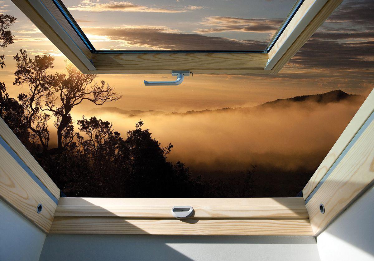 Fototapeta - Les v zobrazení mlhy okna (T030284T254184B)
