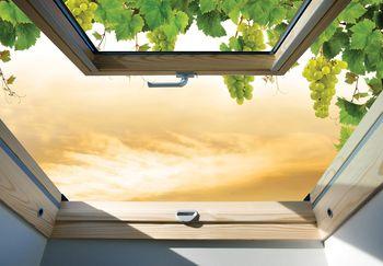Fototapeta - Okno pokryté vínnou révou (T030289T460300A)