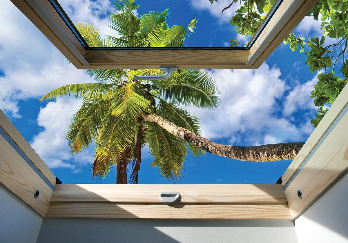 Fototapeta - Pohled z okna na palmu (T030308T254184B)