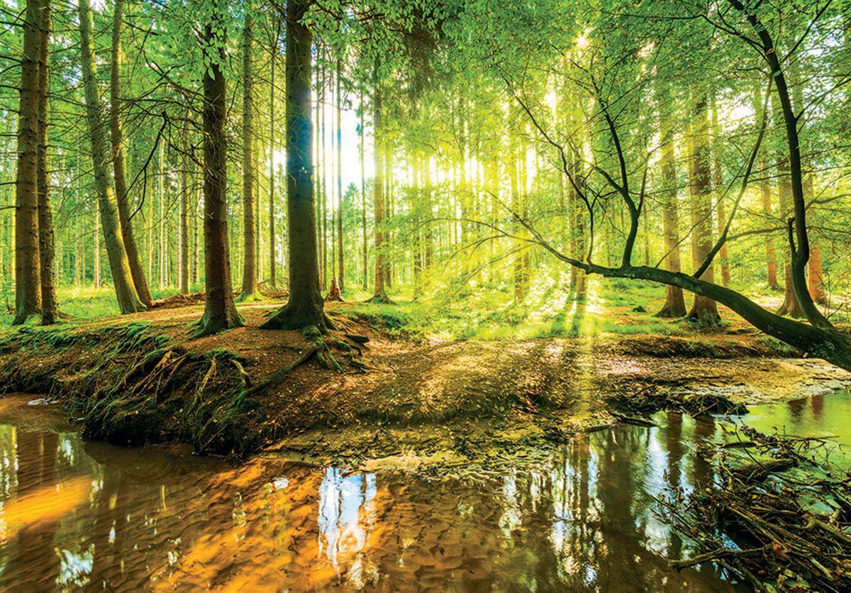 Fototapeta - Slnečný les (T030361T254184B)