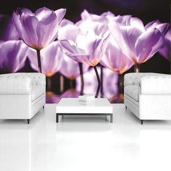 Fototapeta - Květiny - fialový nádech (T030710T254184A)