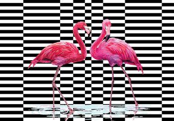 Fototapet - Flamingo 3D (T030712T368280A)
