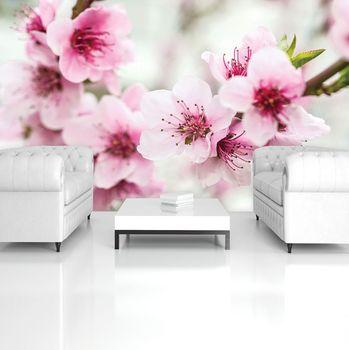 Fototapeta - Květiny (T031024T254184A)