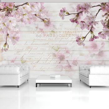 Foto tapeta - češnjev cvet (T031215T368280A)