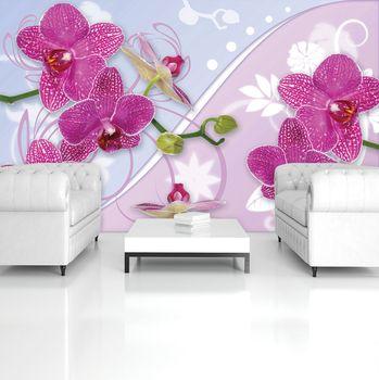 Fototapeta - Orchidej (T031220T254184A)