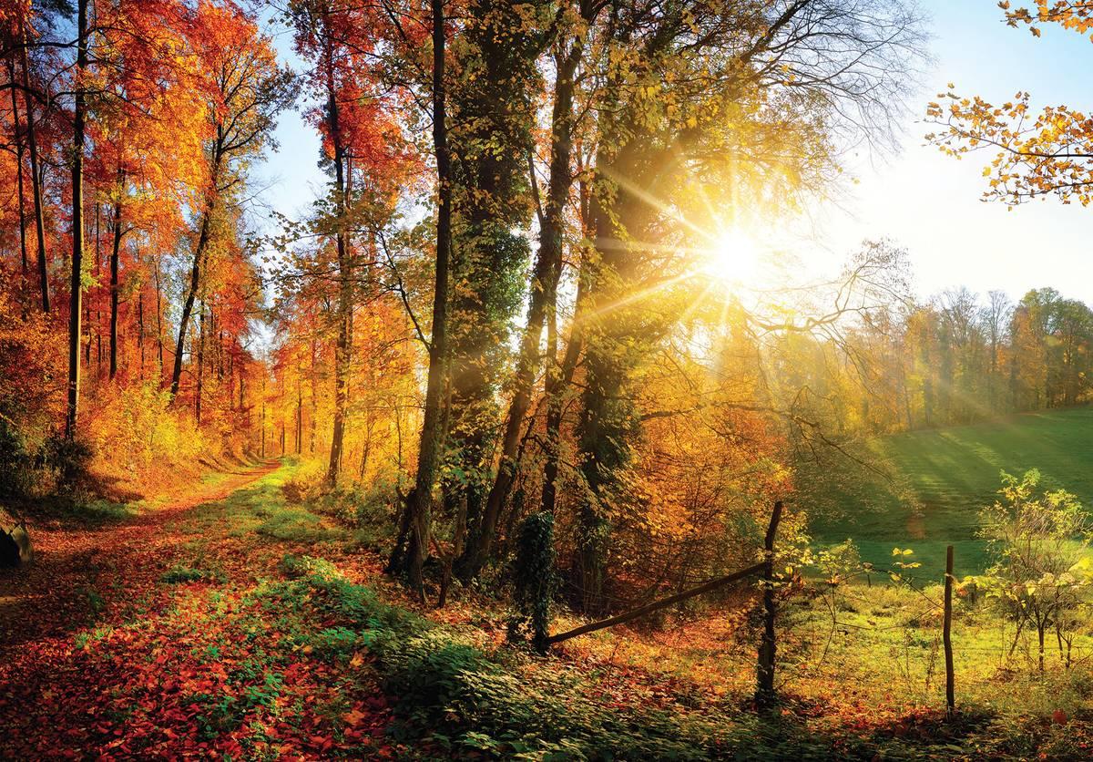Fototapet - Pădure în toamnă (T031229T1525104B)