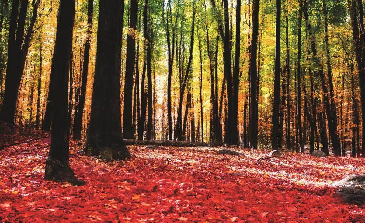 Fototapet - Pădure (T031283T1525104B)