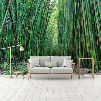 Foto tapeta - Bambus (T031452T254184A)