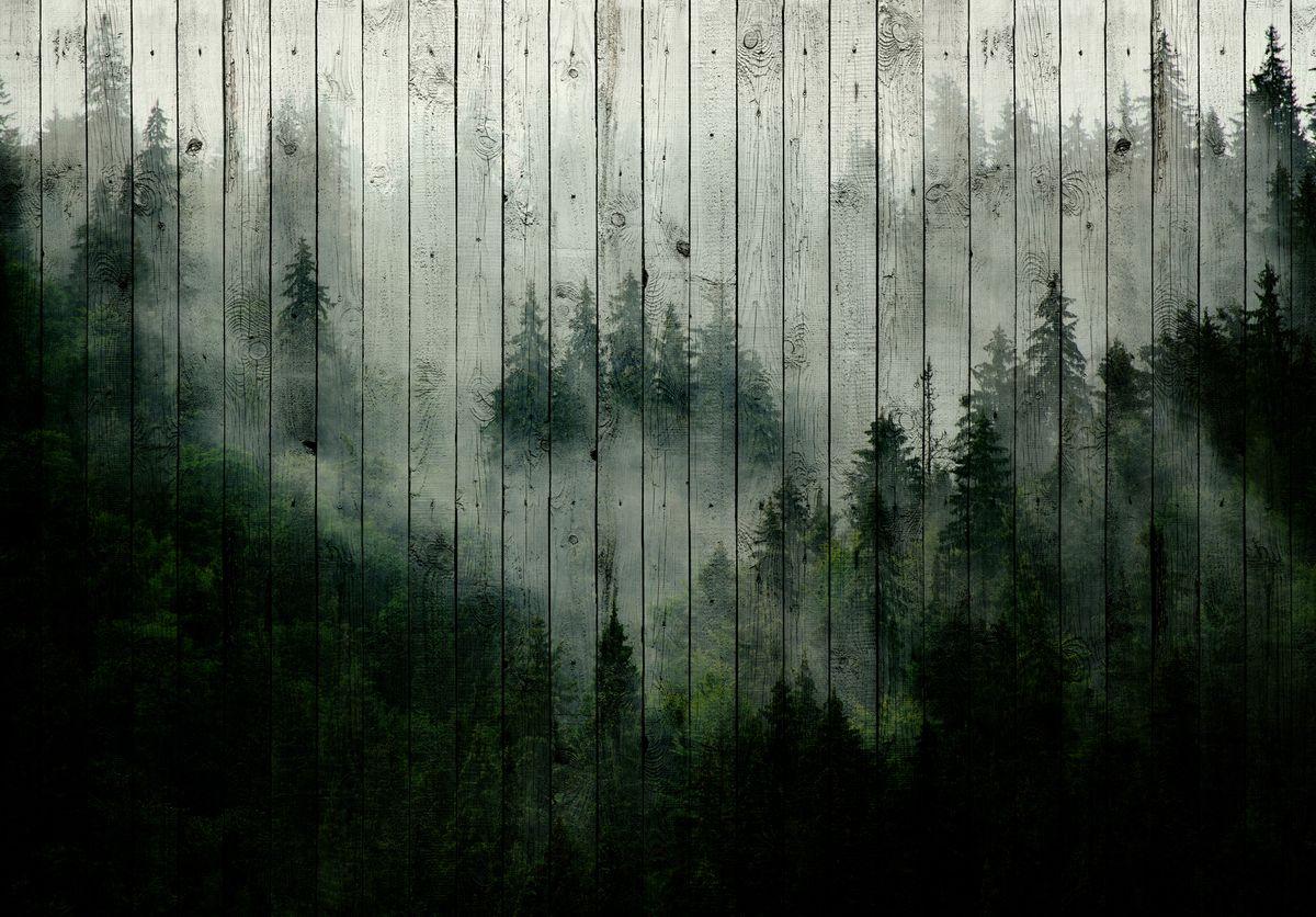 Fototapet - Ceața de pădure (T031919T1525104B)