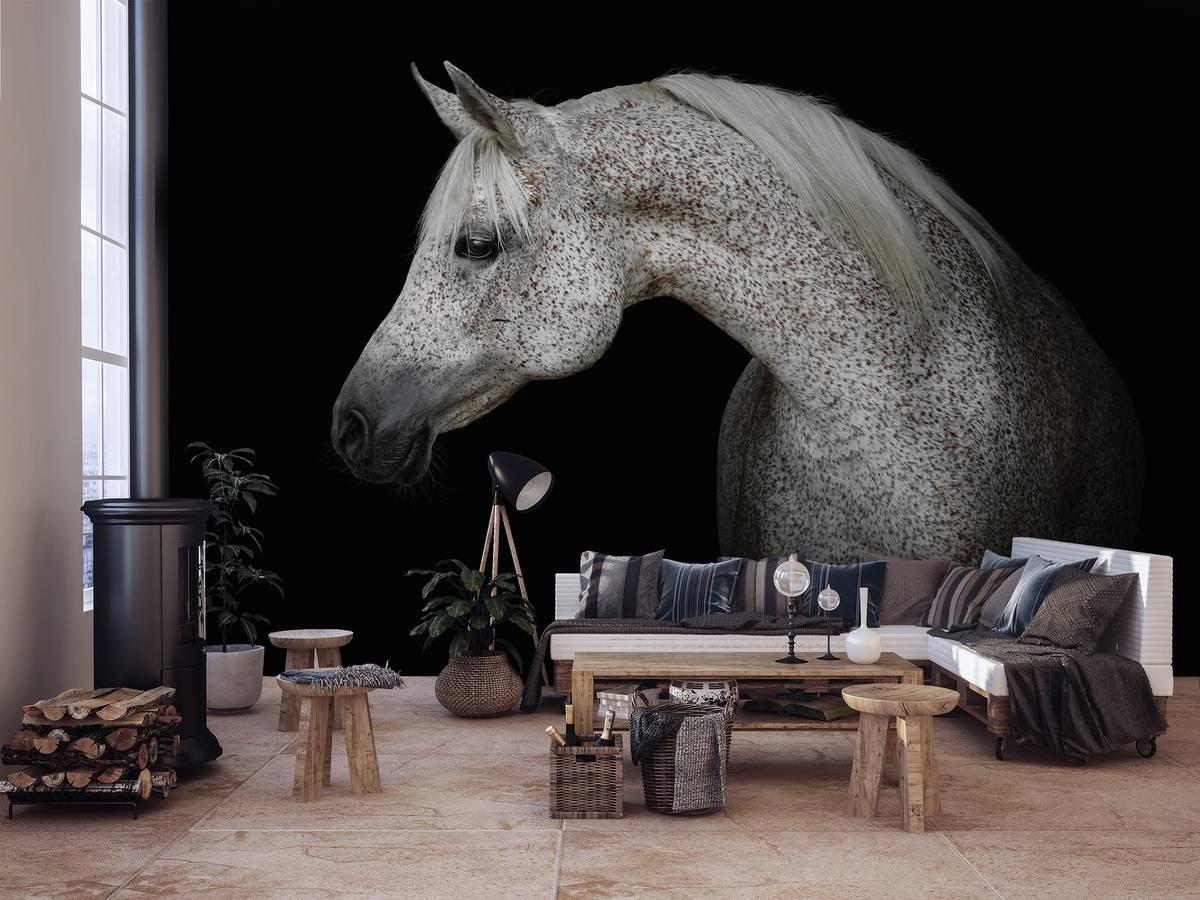 Fototapeta - Bílý kůň (T031959T368254A)