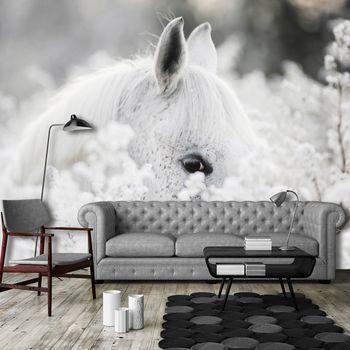 Foto tapeta - Bijeli konj u snijegu (T031960T368280A)