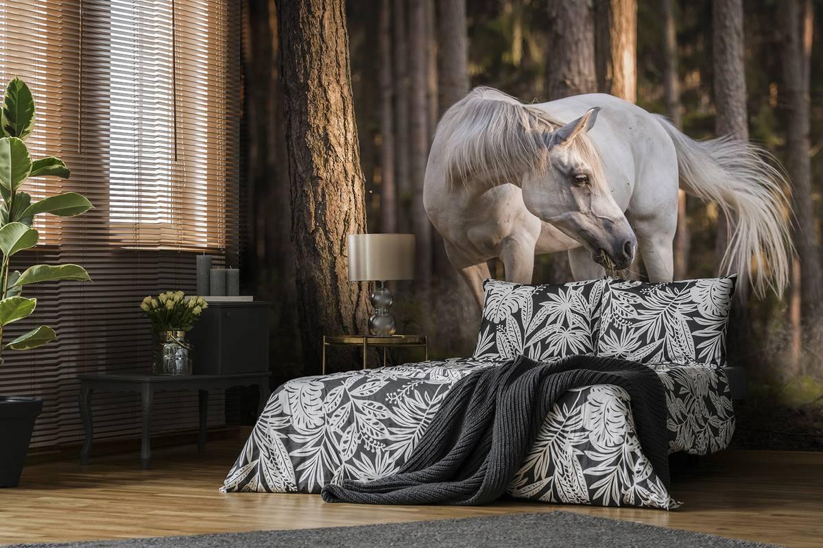 Fototapeta - Bílý kůň v lese (T031961T368280B)