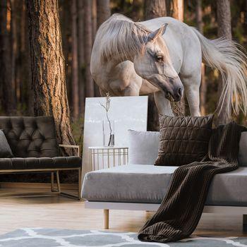 Foto tapeta - Bijeli konj u šumi (T031961T368280A)