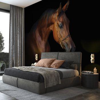 Foto tapeta - Smeđi konj na crnoj pozadini (T031966T368280A)