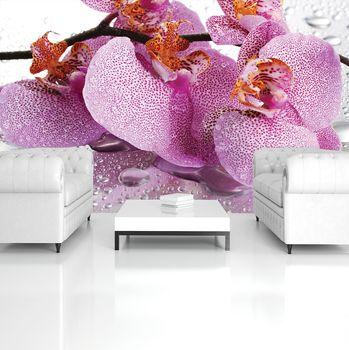Fototapeta - Orchidej (T032589T254184A)