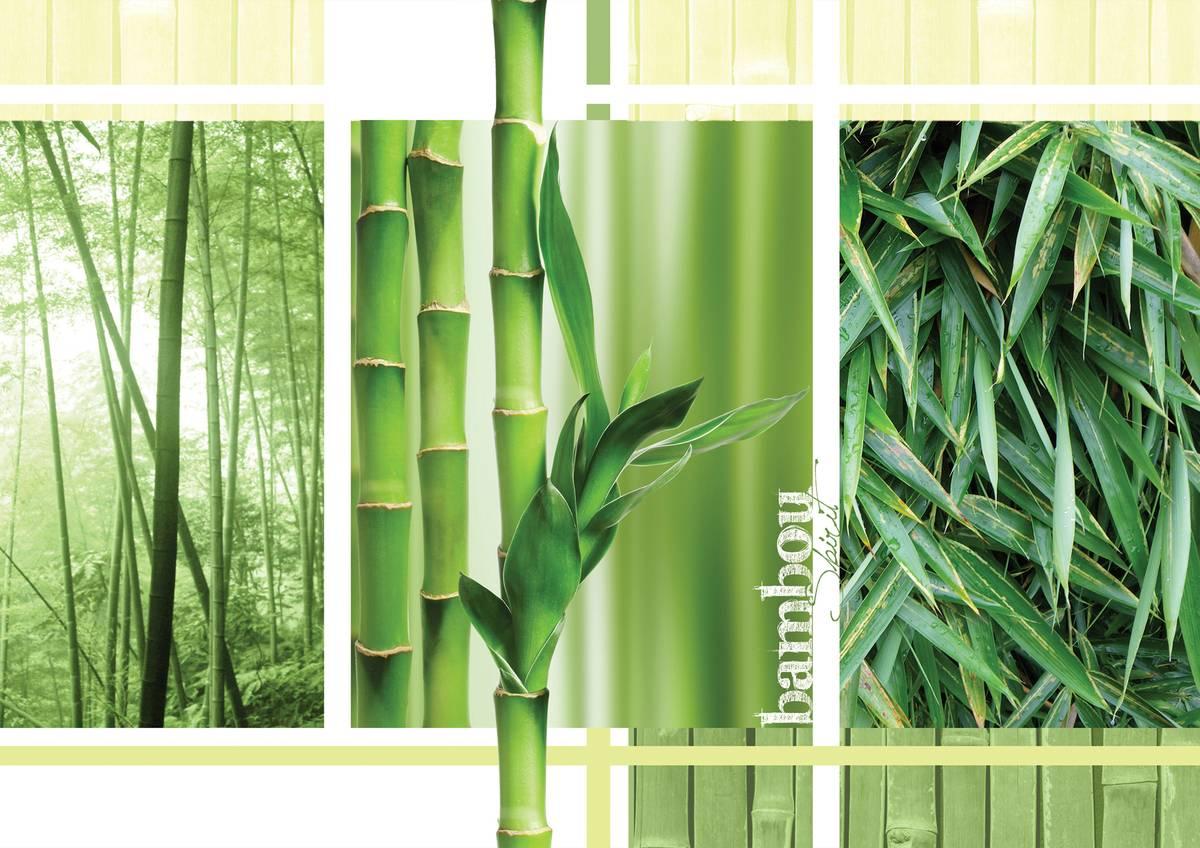 Fototapet - Bambus (T032697T254184B)