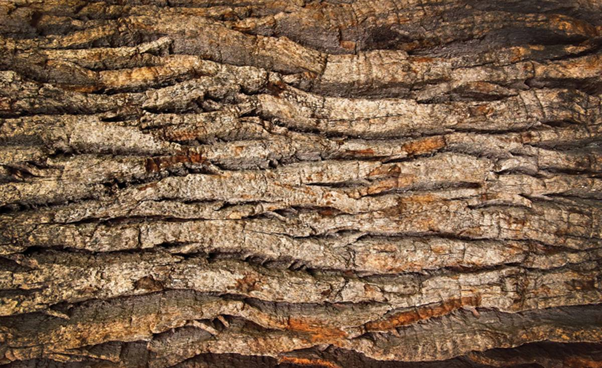 Fototapet - Coaja de copac (T032706T1525104B)