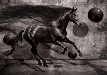 Fototapeta - Černý kůň (T032739T184254A)