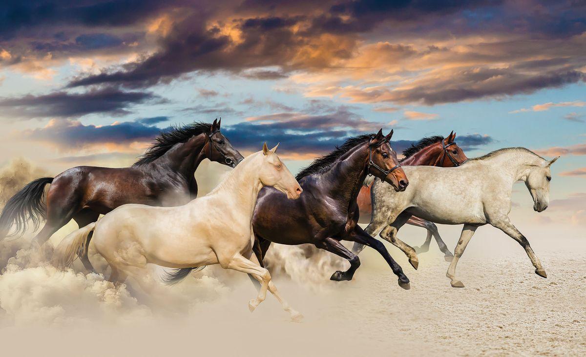 Fototapeta - Cval Mustangů (T032740T368280A)