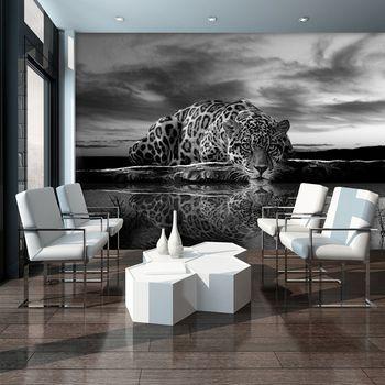 Foto tapeta - Puzajući Jaguar u crno-bijeloj boji (T032889T254184A)