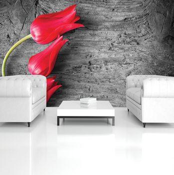 Fototapeta - Červené tulipány (T033433T254184A)