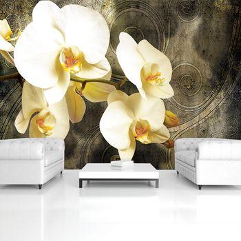 Foto tapeta - Orhideje (T033541T254184A)