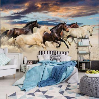Fototapeta - Cval Mustangů (T033559T368254A)