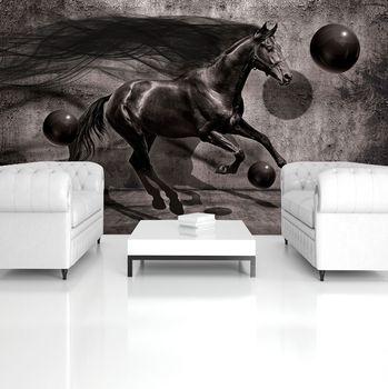 Fototapeta - Čierny kôň (T033691T254184A)