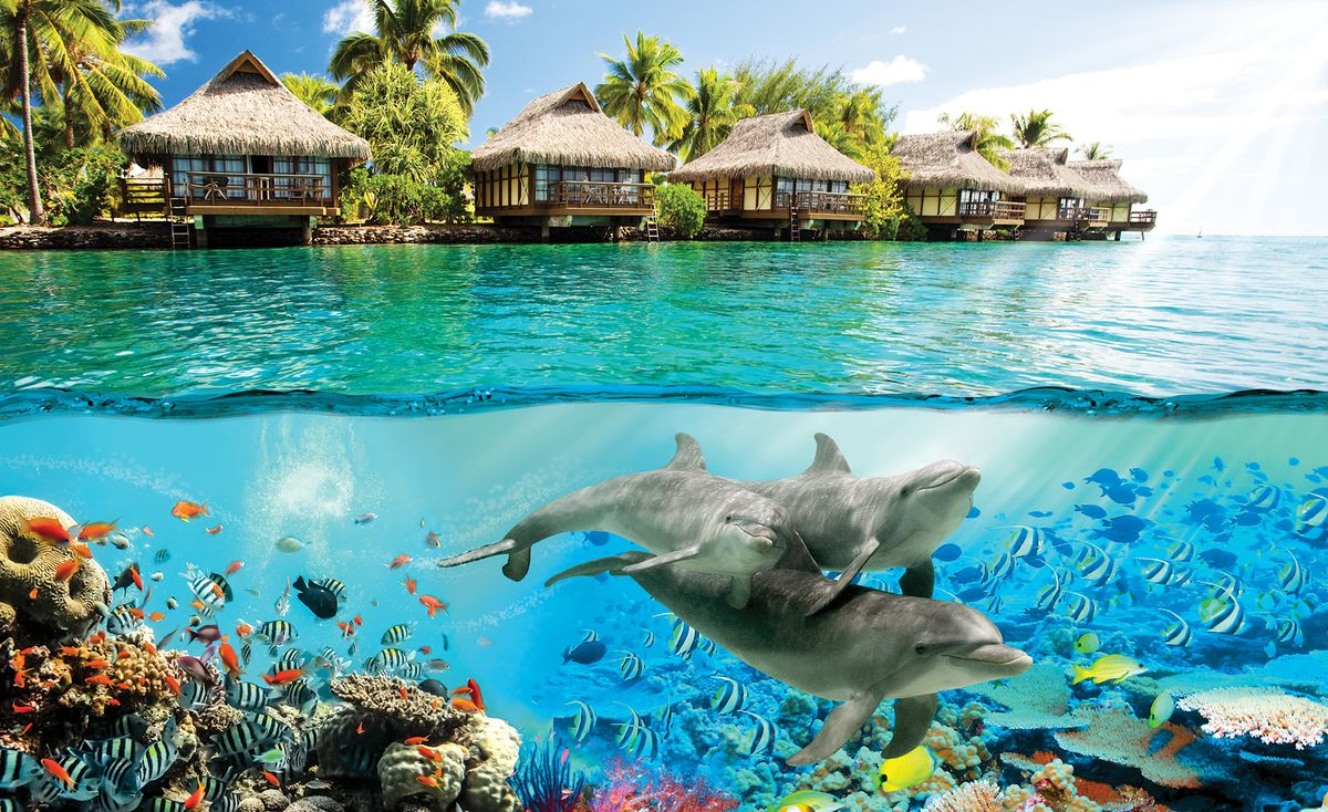 Fototapeta - Delfíni na Havaji (T033742T368254A)
