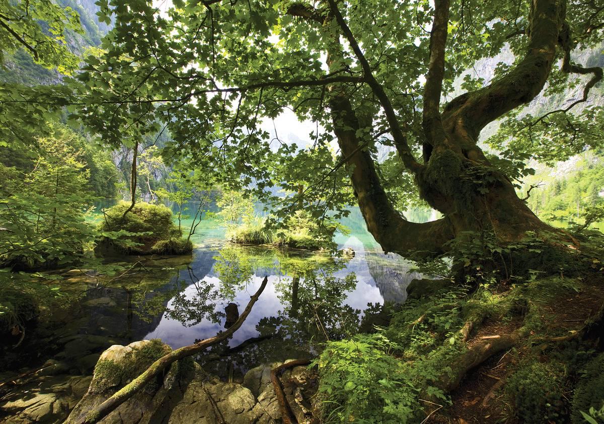 Fototapet - Păscărie ascunsă în pădure (T033956T1525104B)