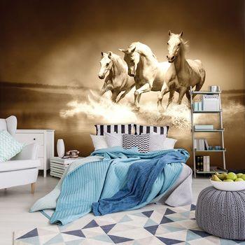 Fototapeta - Bílý kůň tryskem na vodě (T034282T254184A)