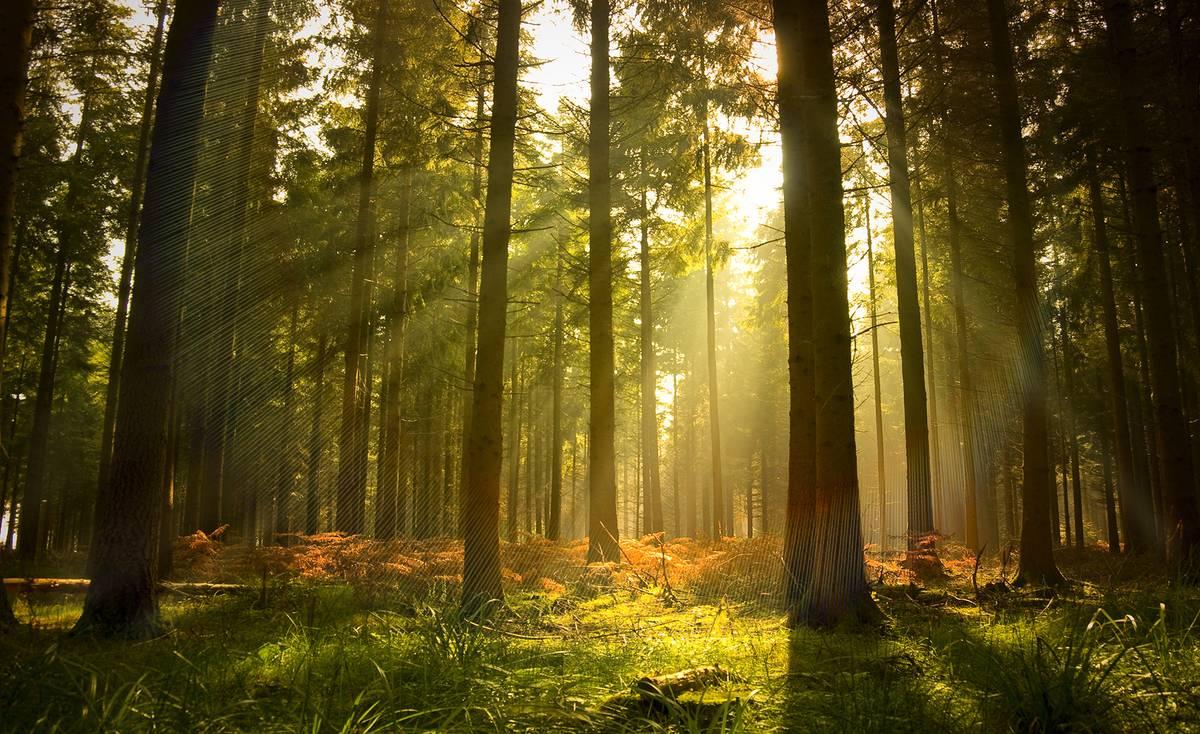 Fototapet - Pădure (T034416T1525104B)