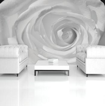 Fototapeta - Biela ruža (T034460T254184A)