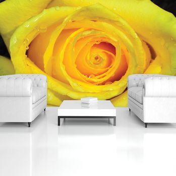 Fototapeta - Žltá ruža (T034462T254184A)