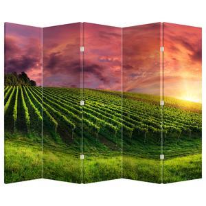 Paraván - Vinohrad s farebným nebom (P020336P225180)