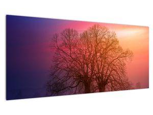 Obraz stromů v mlze (V020088V10040)